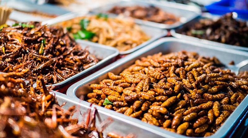 Insectos comestibles en México 2