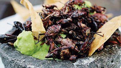 Insectos comestibles en México 3